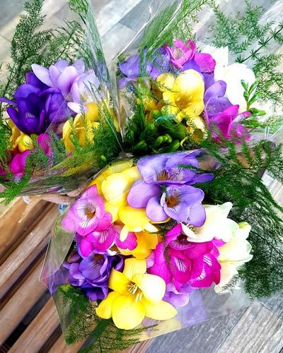 Freesia Cut Flowers
