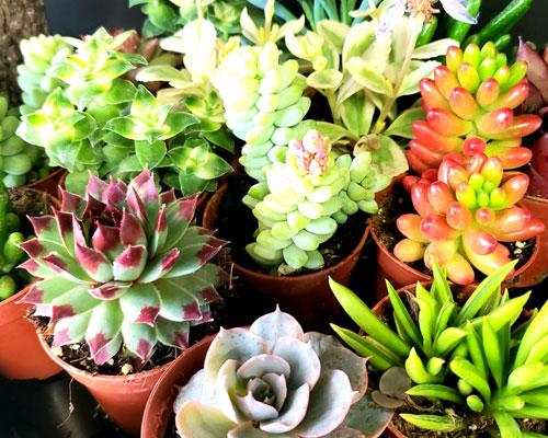 Tropicals, succulents, cacti and air plants